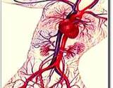 photo of a poster of a circulatory system