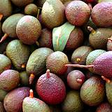 photo of a pile of ripe avacodos good source of digestive enzymes