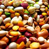photo of dried beans a natural food source of molybdenum