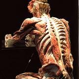 full human body system