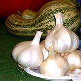 photo of a bulbs of garlic natural source of methionine