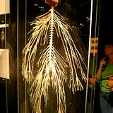Human nervous system on display - photo#1