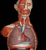 photo of the respiratory system