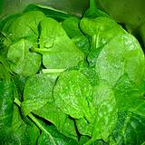 a photo of fresh spinach a natural source of inositol