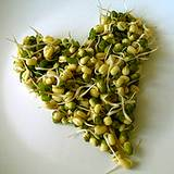 a photo of vegetable sprouts formed into a heart a natural souce of aspartic acid